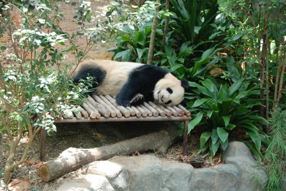 DSC_9761_Zoo_Grosser_Panda