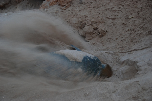 DSC_6440_Ras_Al_Jinz_Turtle_Nesting