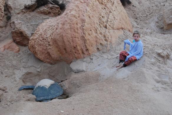 DSC_6455_Ras_Al_Jinz_Turtle